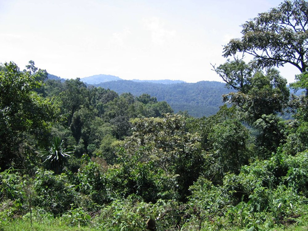 Coffee Production System in Ethiopia – EtBuna